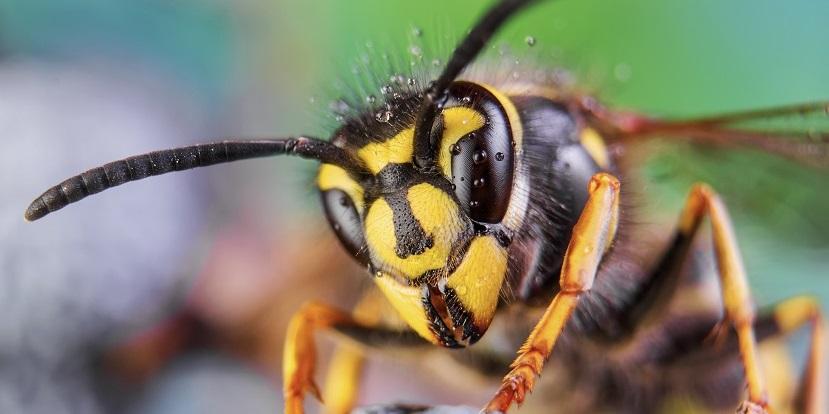 Wespenstich Hausmittel