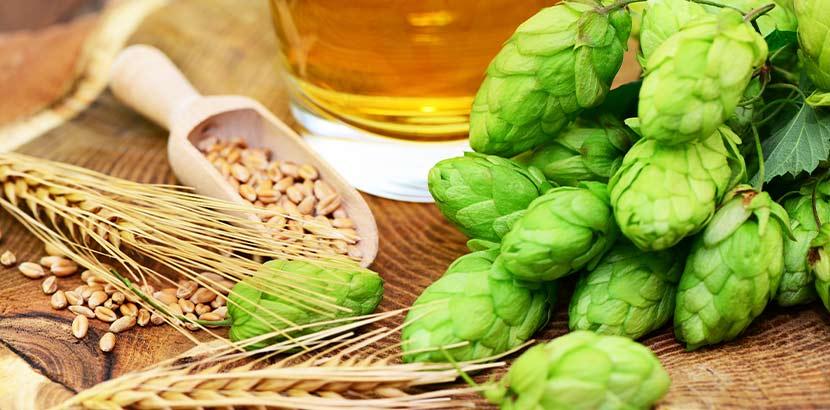 Hopfen, Malz, Gerste und weitere Rohstoffe für das Bierbrauen