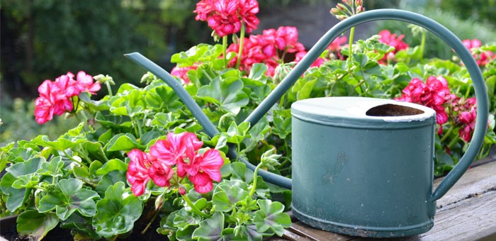 balkonblumen tipps zur pflanzung und pflege. Black Bedroom Furniture Sets. Home Design Ideas