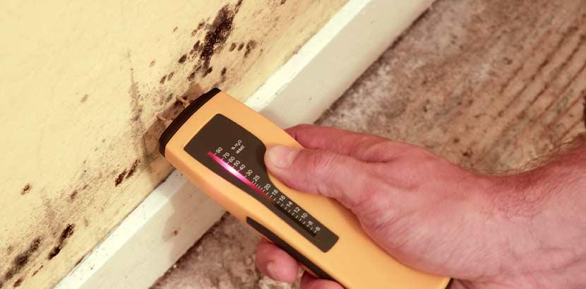 Hand, die ein Feuchtigkeitsmessgerät an feuchte Wände mit starker Schimmelbildung hält.