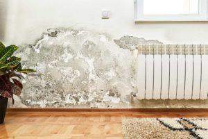 Bild von einer Innenwand mit Schimmel durch feuchte Wände.