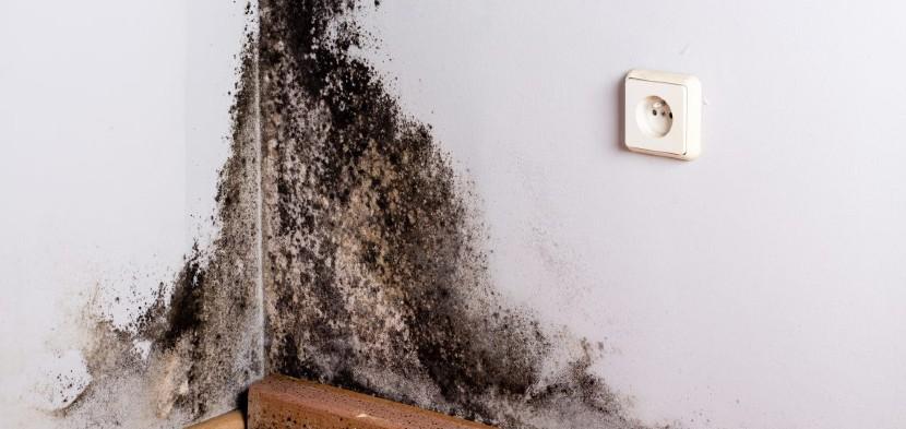 Feuchte Wände trockenlegen - so geht es! - HEROLD.at