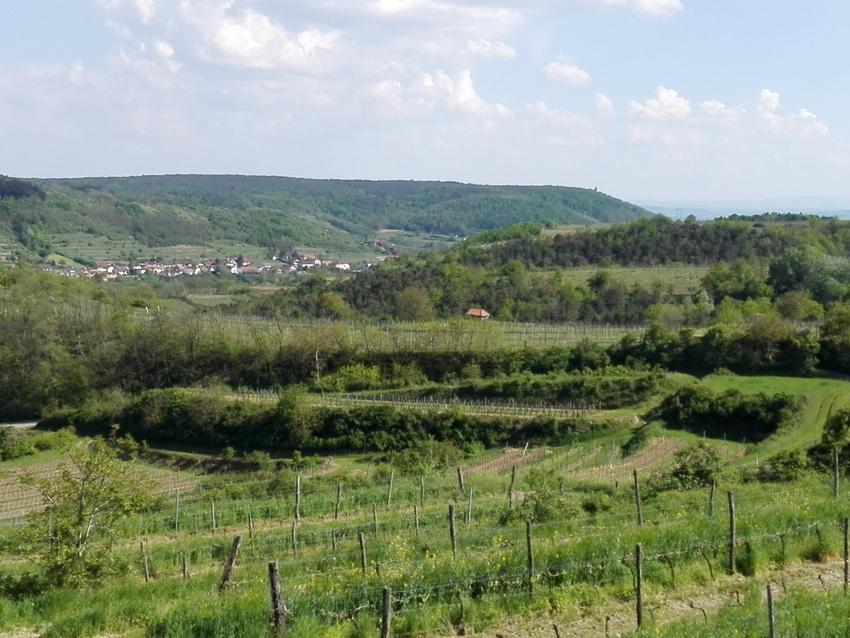 Des is mei Aussicht: von der Weinbeisserei in Mollands, Heurige in Niederösterreich - kekinwien.at