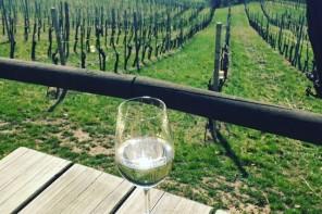 Buschenschank Südsteiermark: Top Weingüter plus Geheimtipps !