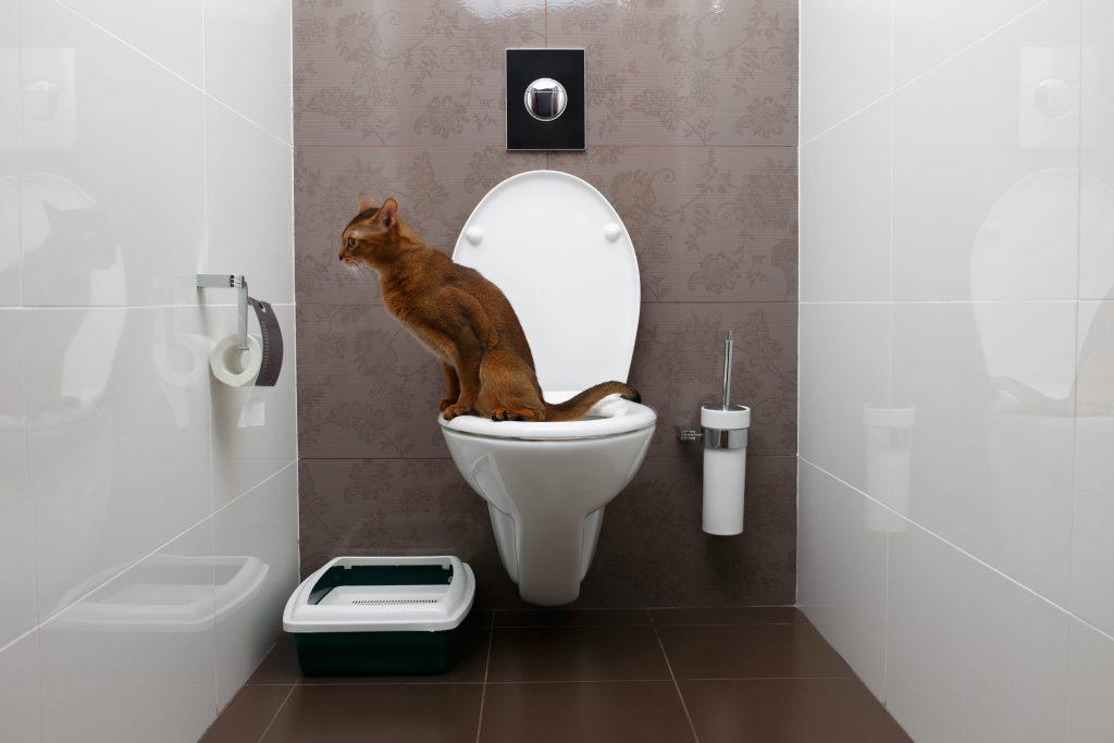 Moderne Toilette: Was zeichnet sie aus? - HEROLD.at