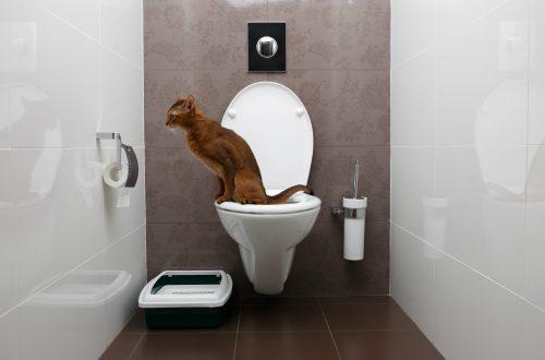 Moderne Toilette für die Katze