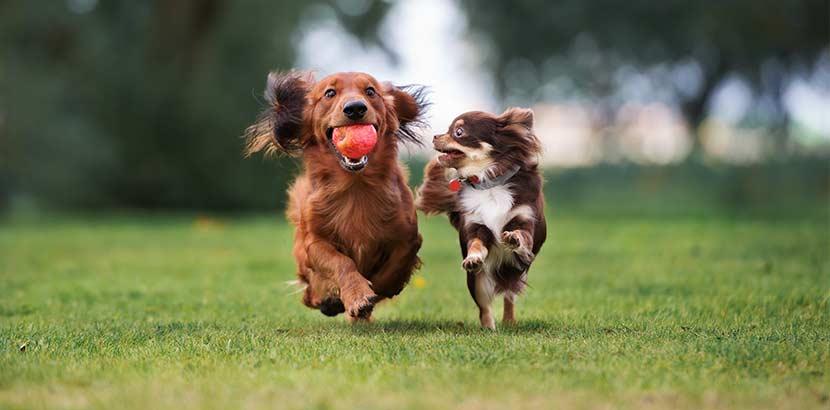 Tierpension für Hunde