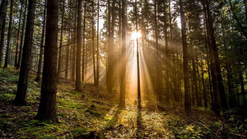 Sonnenstrahlen, die durch dichte Bäume in einem Waldfriedhof brechen. Bestattungskosten Wien.
