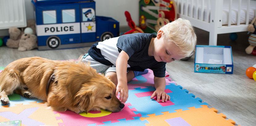 Kleiner Junge, der einen Hund im Gesicht streichelt. Hundebiss, was tun?