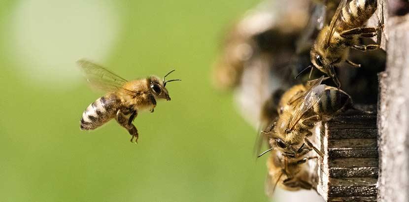 Insektengiftallergiker