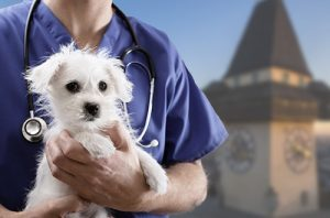 Tierarzt Notdienst Graz