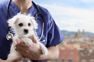 Tierarzt Notdienst Linz