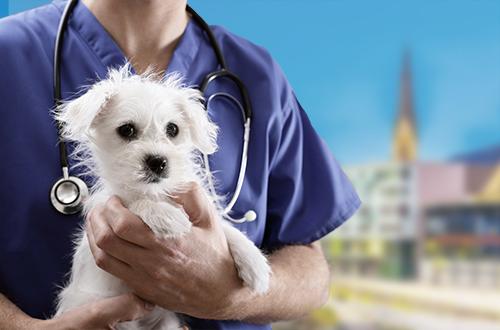 Tierarzt Notdienst Villach (Kärnten)