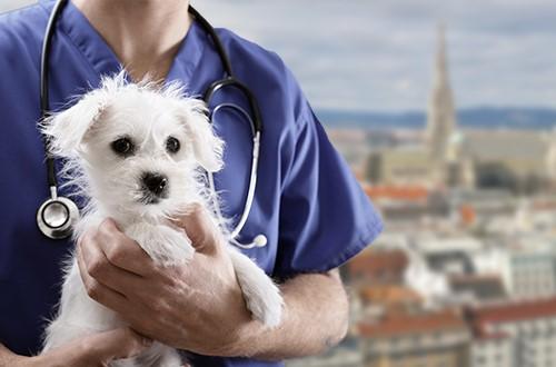 Tierarzt Notdienst Wien
