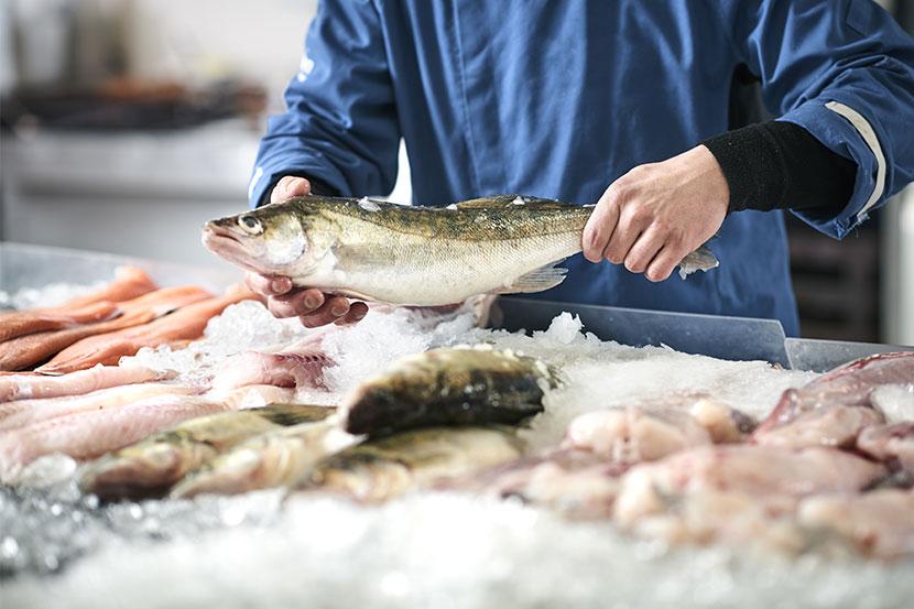 Verschiedene frische Fische und andere Meeresfrüchte auf Eis. Fisch kaufen Wien.