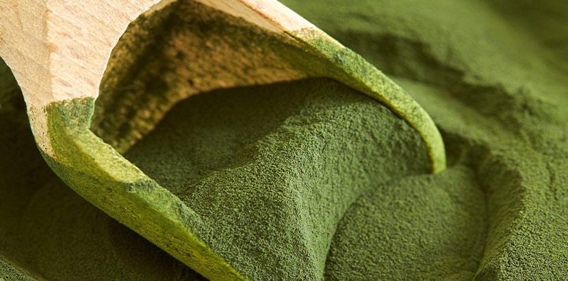 Superfood Chlorella als grünes Pulver