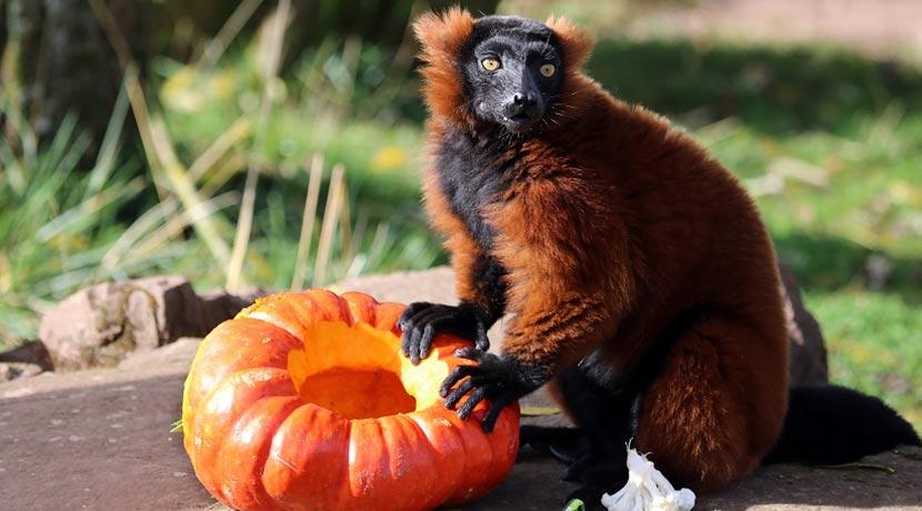 Halloween Wien für Kinder