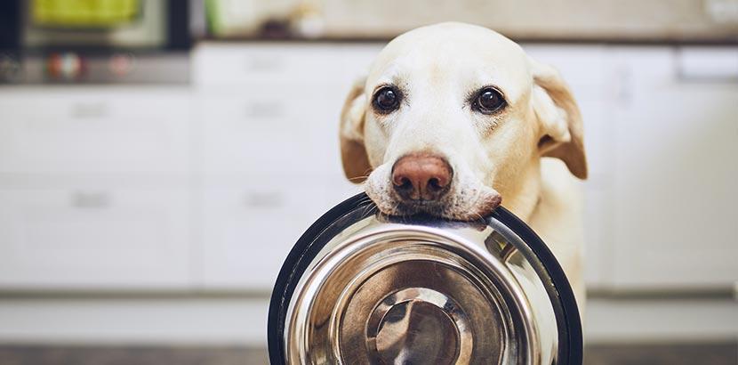 Hundezubehör Checkliste