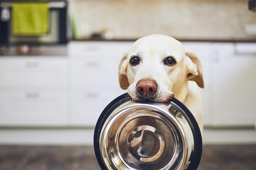 Hund mit Futternapf