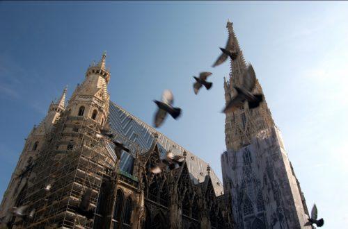 Tauben vertreiben