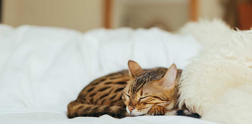 Tierarzt Katze