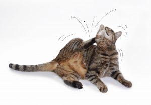 hochwertiges katzenfutter so trennst du die spreu vom weizen. Black Bedroom Furniture Sets. Home Design Ideas