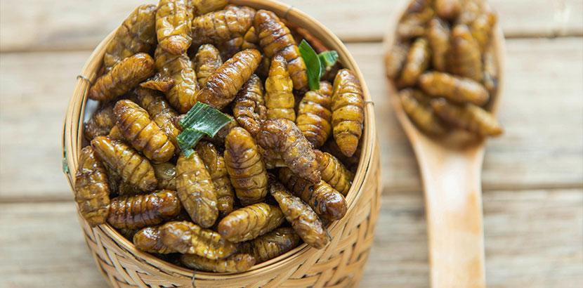 Teller mit gebratenen Seidenraupen. Insekten essen Wien.