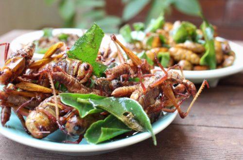 Ein Teller, der hergerichtet ist zum Insekten essen in Wien.