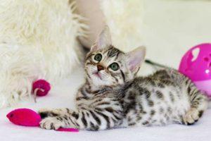 Katzenzubehör Checkliste