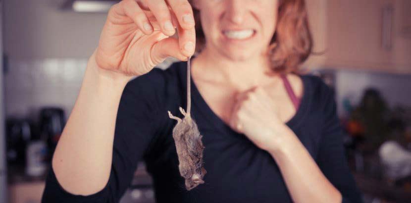 Blonde Frau, die eine tote Maus an Schwanz hält und sich ekelt.