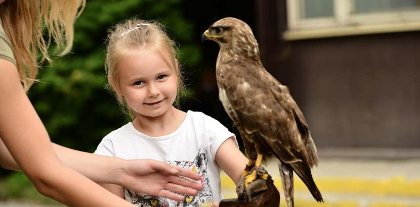 Kleines blondes Mädchen, das einen Falken auf dem Arm hält. Wandern mit Kindern.