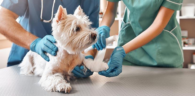 Hundekrankenversicherung - hund beim Tierarzt