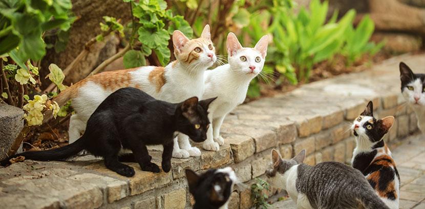 Gruppe von Straßenkatzen. Ohrmilben Katze.