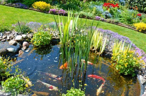Teich Anlegen In Wenigen Schritten Zum Gartenteich Herold At