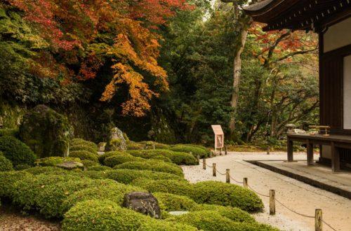 Ansicht eines satt grünen Feng Shui Gartens.