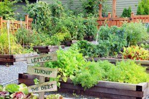 Gemüsebeete mit unterschiedlichen Sorten von Gemüse. Du möchtest ein Gemüsebeet anlegen? Wir verraten, wie es geht!