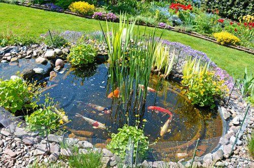 Kleiner Gartenteich mit Goldfischen und Steinumfassung. HEROLD verrät, wie das Teich anlegen als DIY Projekt klappt.