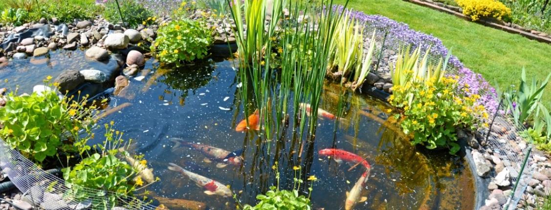 Kleiner gartenteich mit goldfischen und steinumfassung for Teich anlegen