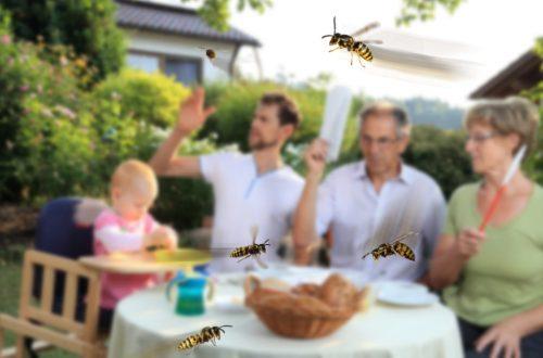 Wespennest entfernen, Wespen bekämpfen