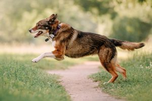 GPS Tracker Hund Katze
