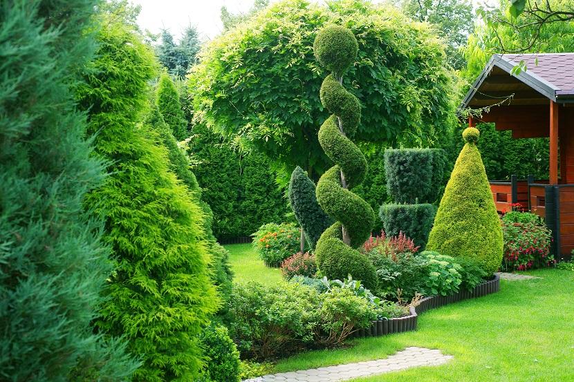 Immergr ne pflanzen bersicht liste und pflegehinweise - Immergrune pflanzen garten ...