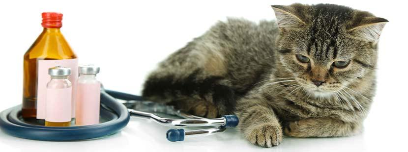 Kranke Katze niest und liegt am Tisch neben einer Flasche mit Medizin.