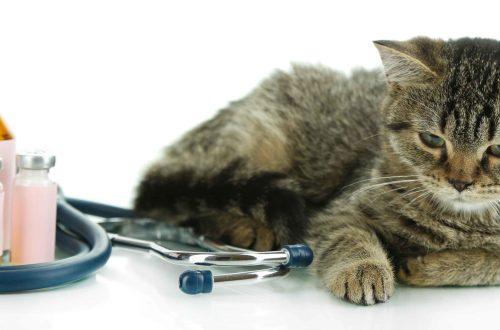 Deine Katze niest? Die 10 häufigsten Katzenkrankheiten