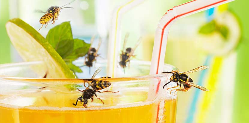Wespenstich Was Tun