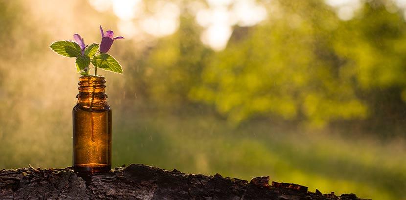 Kleines Fläschchen mit Bachblüten, das in einer natürlichen Umgebung steht.