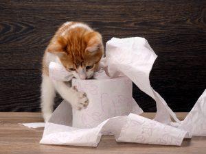 katzenspielzeug selber machen mit küchenrolle stock und