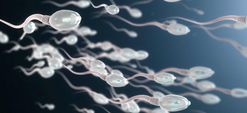 Spermiogramm