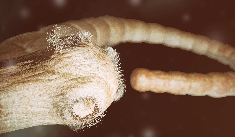 Bandwurm Beim Menschen Symptome Diagnose Und Therapie Heroldat