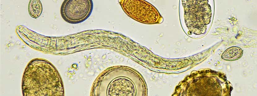 Scheide behandlung madenwürmer Würmerbefall bei