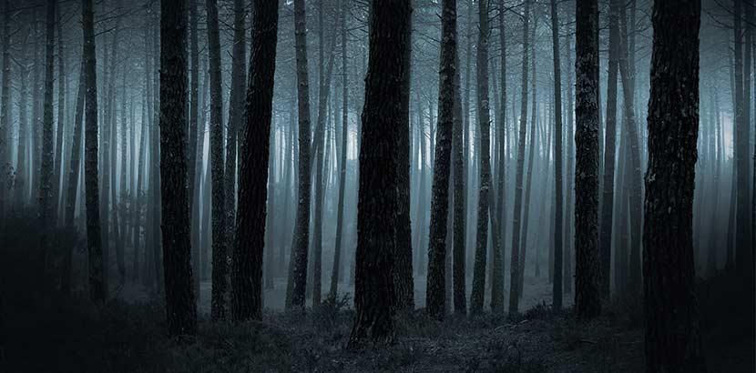 Alptraum - finsterer Wald